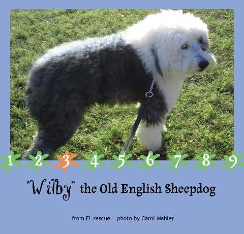 real sheepdog WILBY